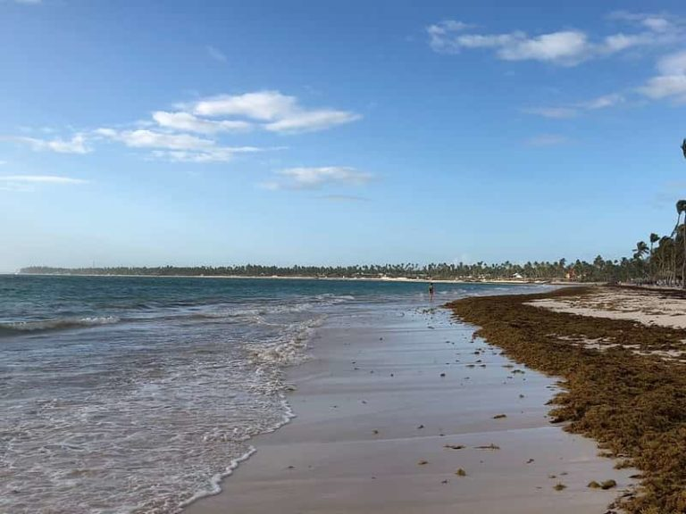 The Seaweed in Punta Cana Problem, Alternative Solutions