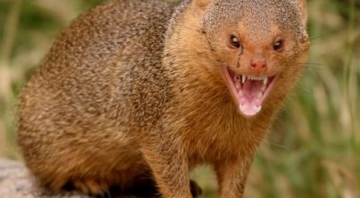 Are There Dangerous Or Poisonous Animals In The Dominican Republic?