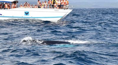 Punta Cana Whale Watching Excursions, Guide To Do Ecotourism Correctly
