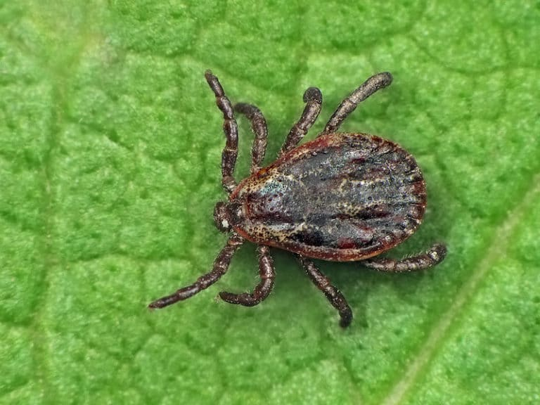 Does Lyme Disease Exist in The Dominican Republic?