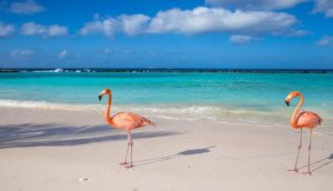 The Best Places to See Flamingos In The Dominican Republic