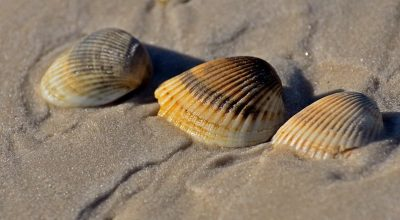 Why You Shouldn't Take Beach Shells When Visiting The Dominican Republic