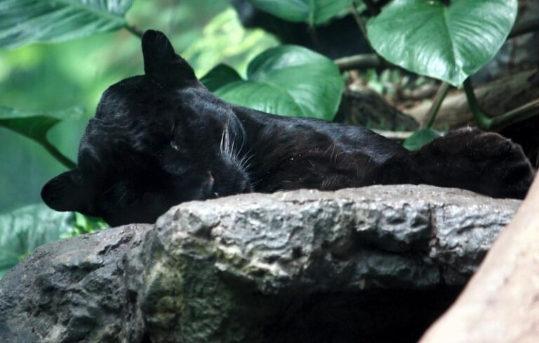 5 Popular Wild Animals That Don't Exist in the Dominican Republic