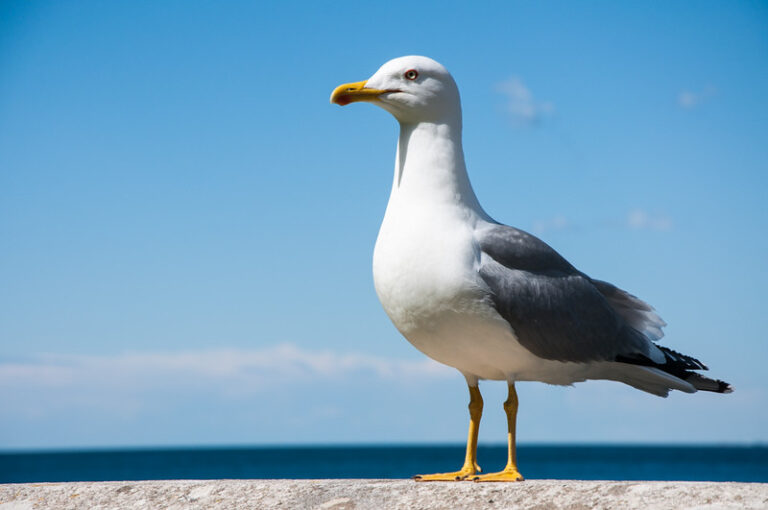 Are there Seagulls in the Dominican Republic? (Solved)